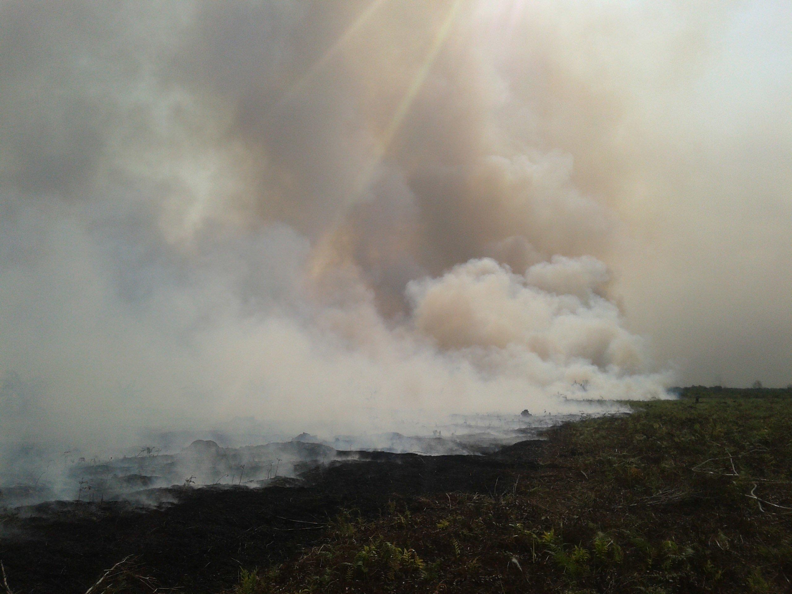 Hutan dan Lahan Gambut yang Terbakar