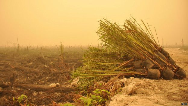 kebakaran hutan dan kelapa sawit