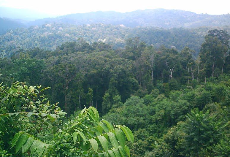 hutan hujan tropik di indonesia