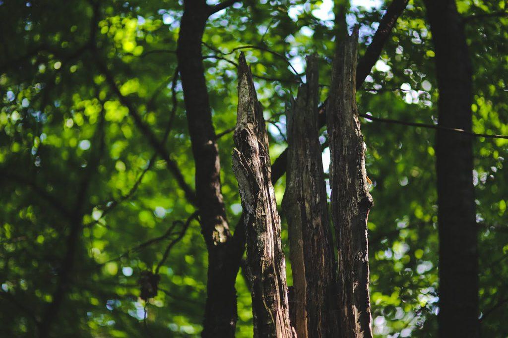 Penyakit Hutan pohon sakit