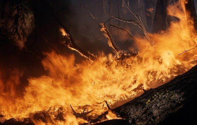 pengendalian kebakaran hutan
