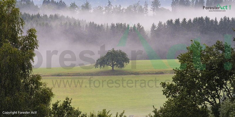 Ekosistem Hutan di Taman Nasional