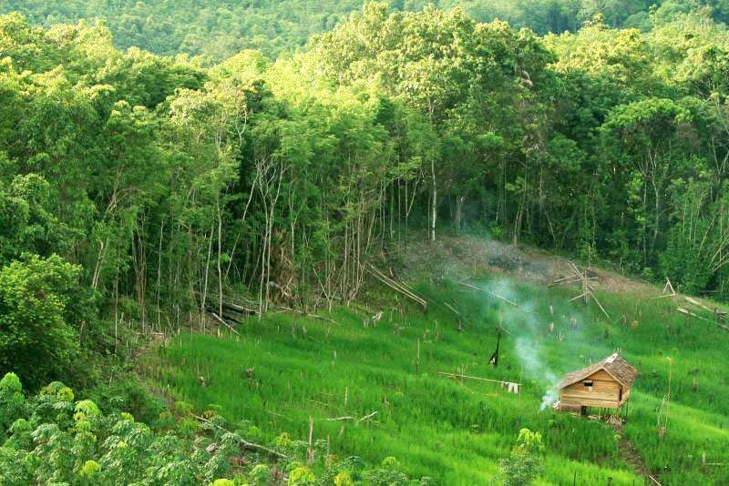 Peningkatan Jumlah Penduduk dan Kondisi Hutan Indonesia