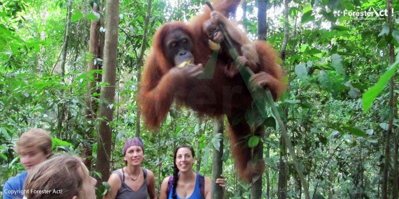 Pusat Rehabilitasi Orangutan Bahorok di Taman Nasional Gunung Leuser