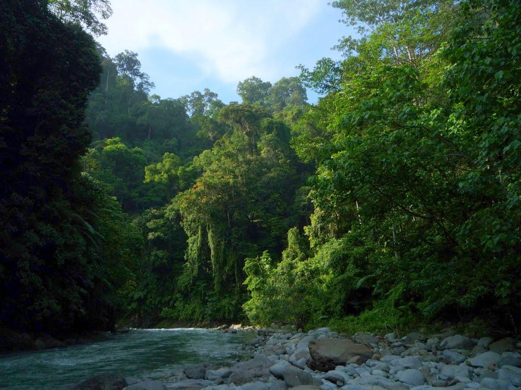 Taman Nasional Gunung Leuser 2