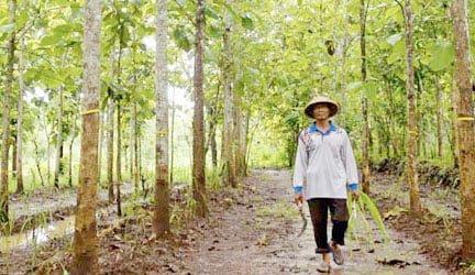 hutan rakyat