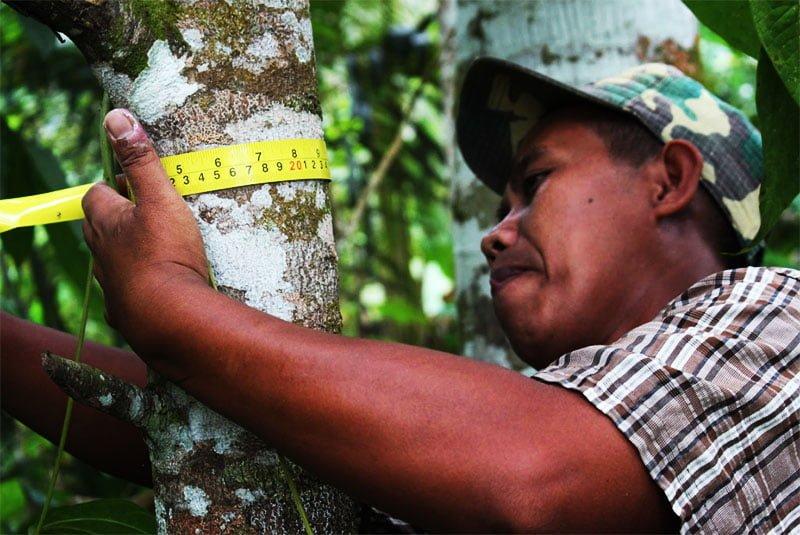 inventarisasi hutan tanaman