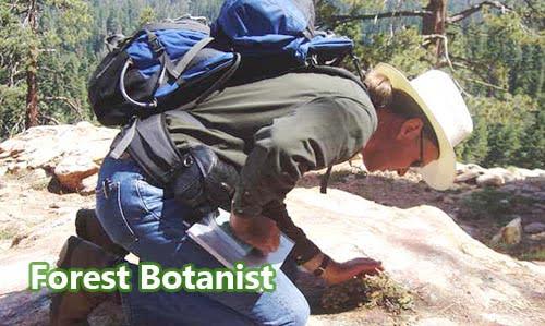 Ahli Botani Hutan (Forest Botanist)