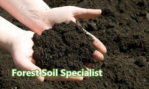 Ahli Tanah Hutan (Forest Soil Specialist)