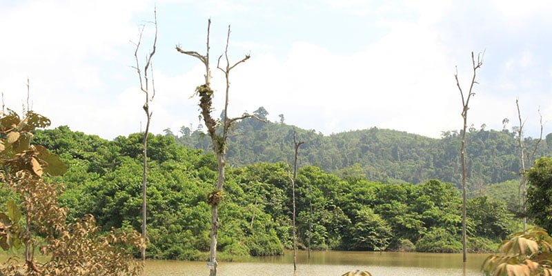 Pengertian Hutan Berdasarkan Aspek Ekologi