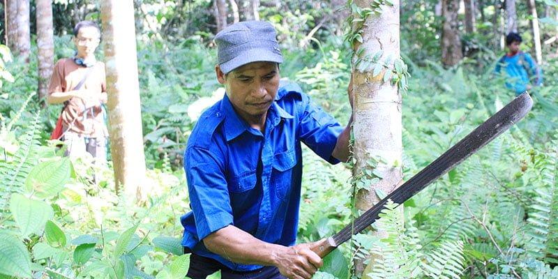 Pengertian Hutan Berdasarkan Status Hukum