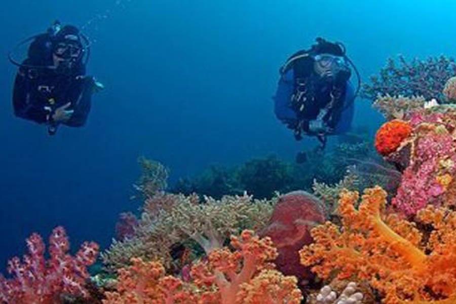 Bawah Laut Wakatobi from google.com