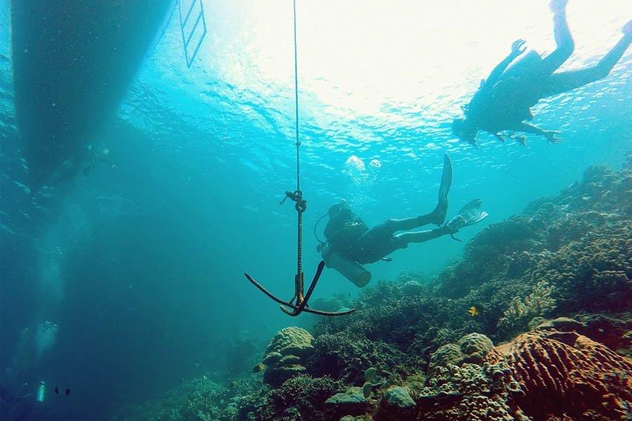 Pesona Bawah Laut Wakatobi from google.com