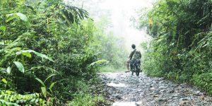 Hutan dalam Kebijakan Publik via mongabay.com