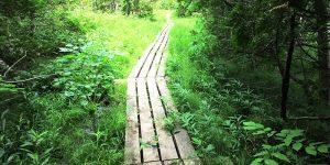 Pembukaan Wilayah Hutan via wordpress.com