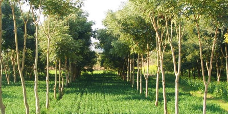 Agroforestry via lift-fund.org