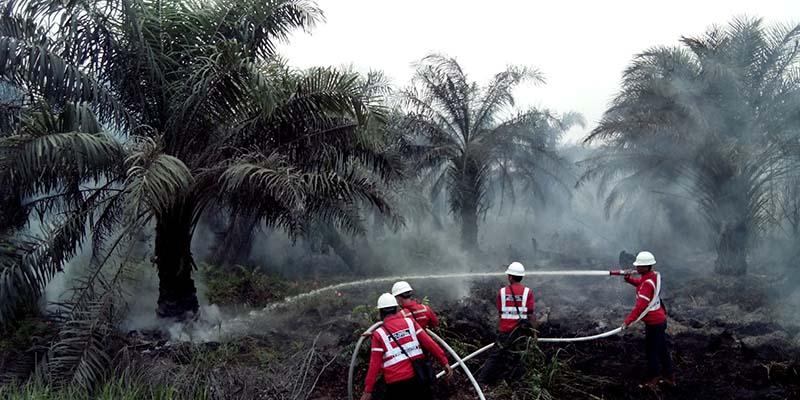 Kebakaran di Kebun Kelapa Sawit via beritadaerah.co.id
