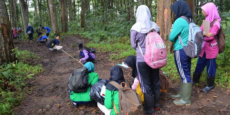Jurusan Manajemen Hutan di Indonesia