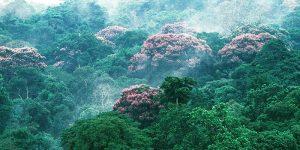 Manajemen Hutan