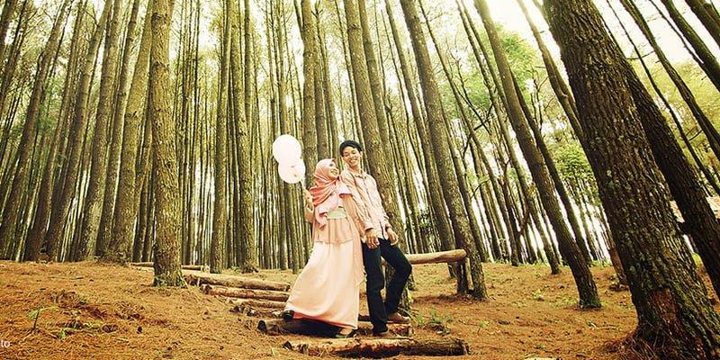 Hutan Pinus Imogori