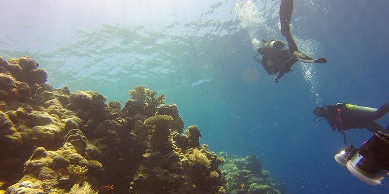 Menyelam di Taman Nasional Bali Barat