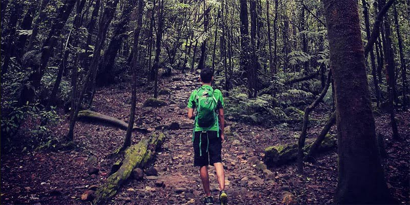 Kandang Batu Taman Nasional Gunung Gede-Pangrango