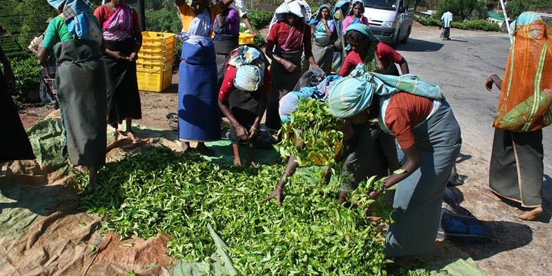 Peran Perempuan dalam Pemanfaatan Hutan