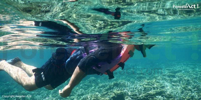Wisata Bawah Air Pulau Pahawang