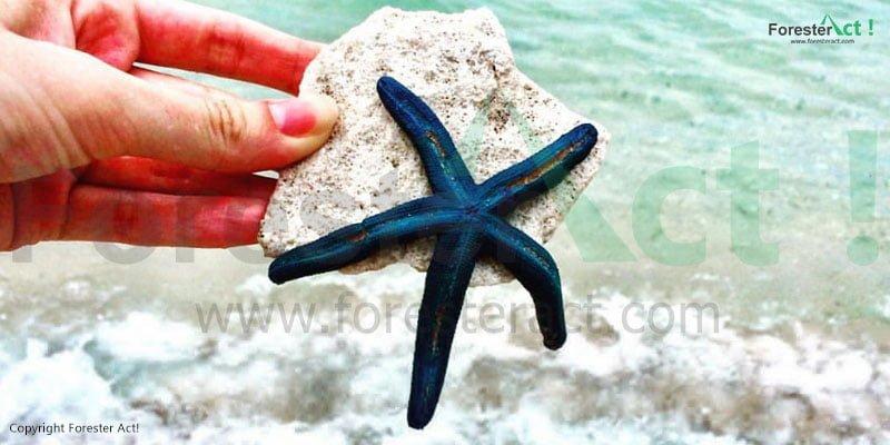 Bintang Laut yang ada di Gili Trawangan