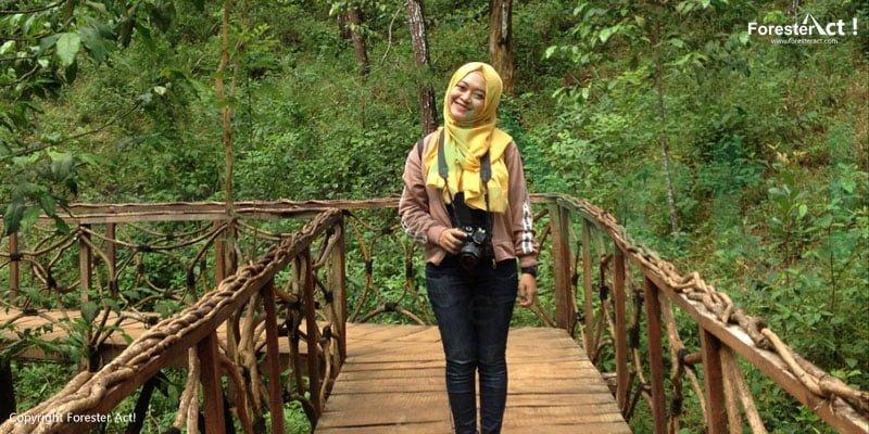 Jalan Kayu di Hutan Pinus Mangunan
