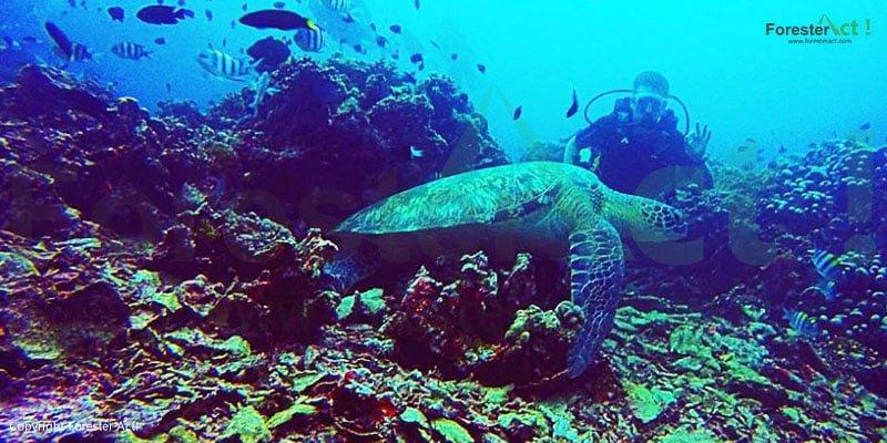 Keindahan Terumbu Karang dan Biota Laut Gili Trawangan Lombok