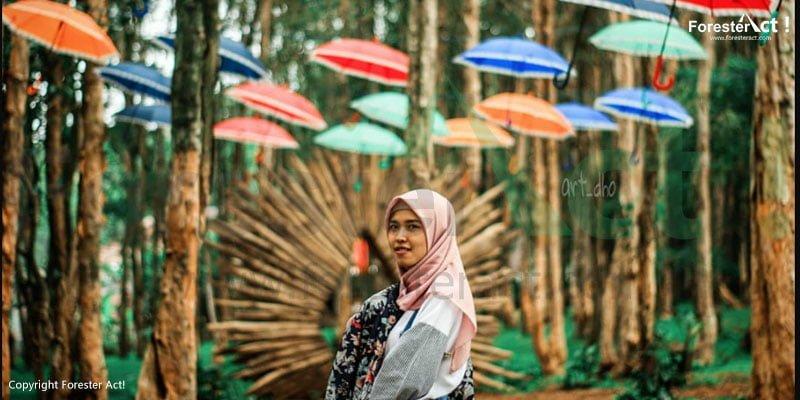 Seorang Perempuan di Hutan Pinus Mangunan