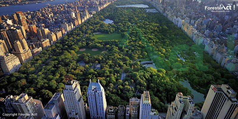 Hutan Kota di New York