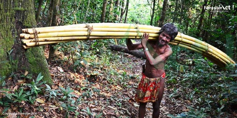 Masyarakat Hutan