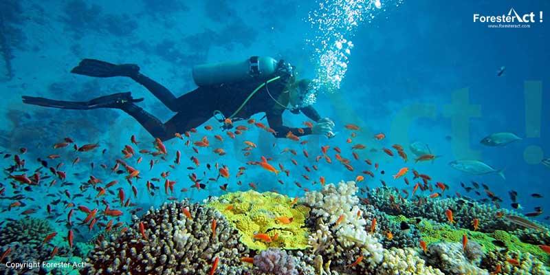Pesona Bawah Laut Pulau Derawan