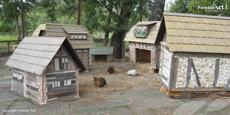 Rabbit Village