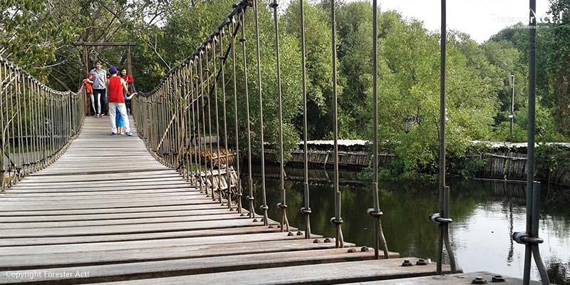 Jembatan dari Kayu di TWA Angke Kapuk