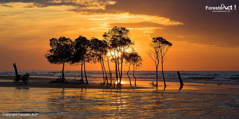 Senja di Hutan Mangrove