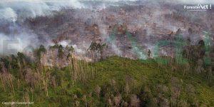 Ancaman Kebakaran Hutan bagi Harimau Sumatera