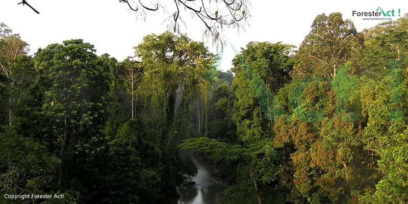 Hutan Hujan Tropis Sumatera sebagai Habitat dari Harimau Sumatera
