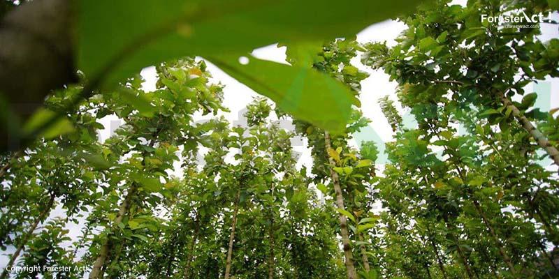 Hutan Tanaman Jati