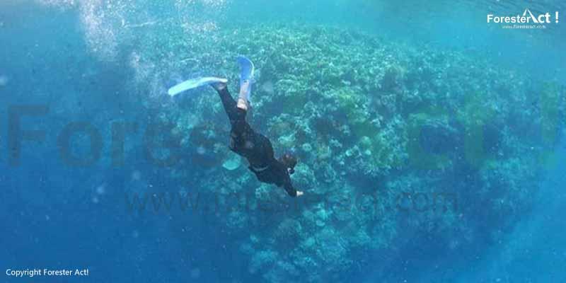 Keindahan-Alam-Bawah-Laut-Bunaken