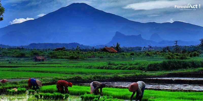 Kaki-Gunung-Ciremai