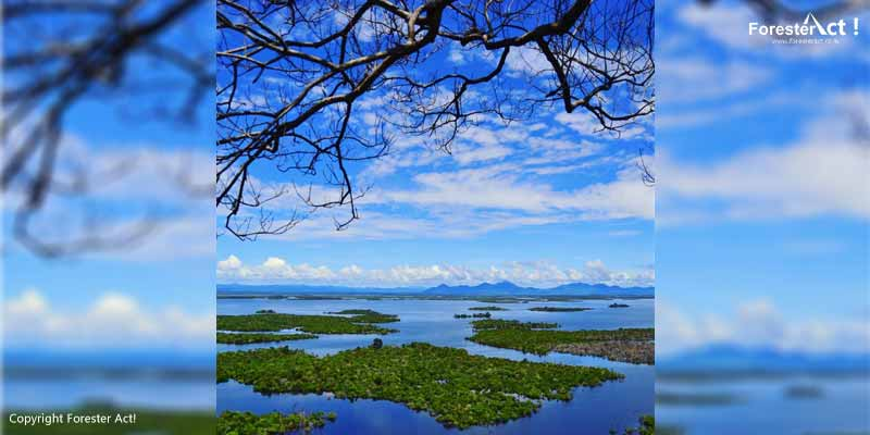 Ekosistem Lahan Basah di Taman Nasional Danau Sentarum