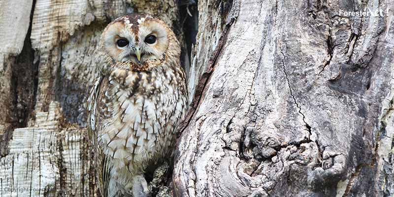 Seleksi Alam dan Evolusi pada Makhluk Hidup