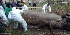 Gajah ditemukan tewas