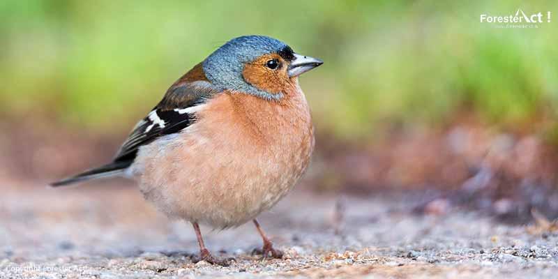 Adaptasi pada Burung Finch