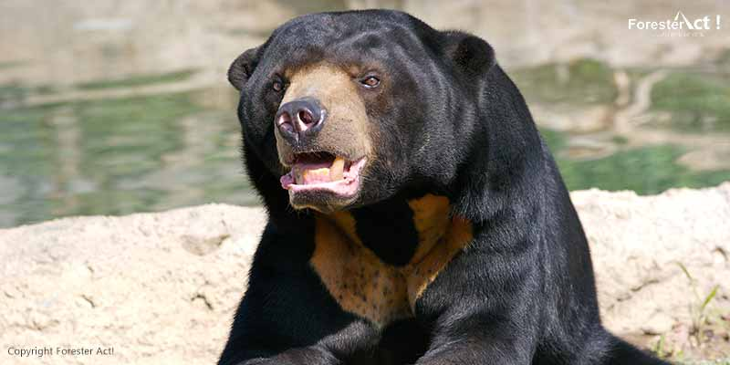 Beruang Madu di Kebun Binatang