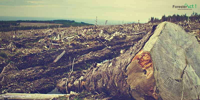 Ilustrasi Gambar Deforestasi pada Hutan