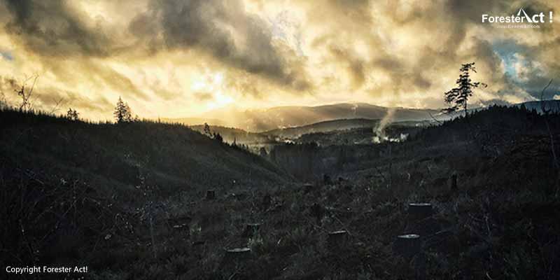 Ilustrasi Hilangnya Pepohonan Akibat Deforestasi